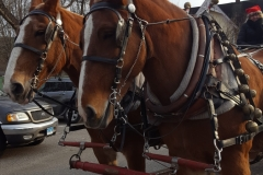 Christmas in Riverton 2018 - Horse Drawn Carriage Rides through Town